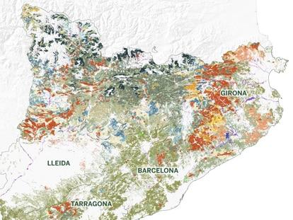 El 65% de Cataluña son bosques: cómo son, dónde encontrarlos y cuáles son sus principales tipos de árboles