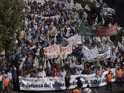 Manifestación en defensa del olivar, hoy en Madrid. En vídeo, la protesta de olivareros este jueves en Madrid.