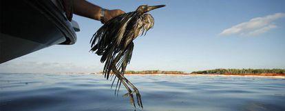 Rescate de un ave afectada por el vertido de petróleo en el golfo de México en una imagen tomada el pasado 26 de junio.