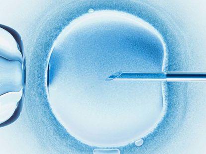 La metamorfosis reproductiva