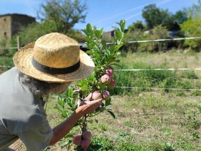 Los participantes pueden colaborar en la recolección de hortalizas y frutas.