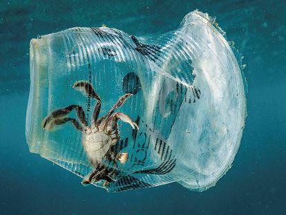 Un cangrejo permanece atrapado en un vaso de plástico en el mar en el Pasaje de Isla Verde en Filipinas el pasado 7 de marzo de 2019.