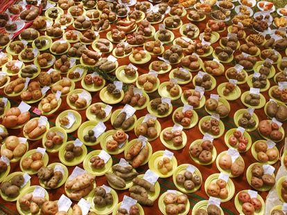 Muestra de variedades de papa que se pueden cosechar en los alrededores del Santuario Nacional Pampa Hermosa, en Perú.