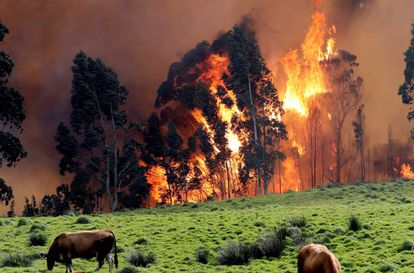 Incendio en la comarca asturiana de Naves