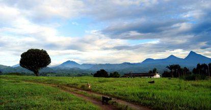 El Parque de Virunga ocupa 700.000 kilómetros cuadrados.