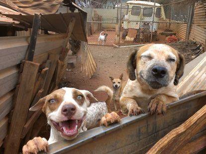 El sarcoma de Sticker aún está muy presente entre los perros callejeros.