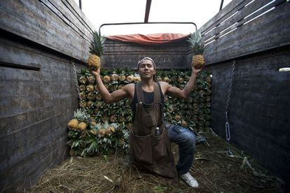 Daniel es de Oaxaca (México) y se dedica a la cosecha de piñas. Posa con dos de ellas en la Central de Abastos de México.
