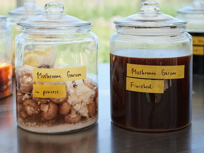 Garum de hongos en proceso (izquierda) y ya acabado (derecha) creados por René Redzepi en Noma.