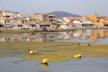 Estado actual de la playa de Los Nietos, en el mar Menor.
