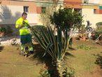 Operario de Jardinería del Ayuntamiento de Utrera, una de las categorías laborales de la nueva bolsa de empleo abierta hasta el día 30 de junio.  Ayuntamiento de Utrera 15/06/2020