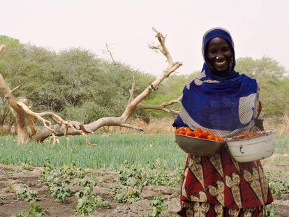 Hadje Gombo, con tomates y okras en el área de Mélia, en la región del Lago (Chad).