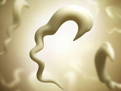 Representación del 'trypanosoma cruzi', el parásito que causa el chagas.