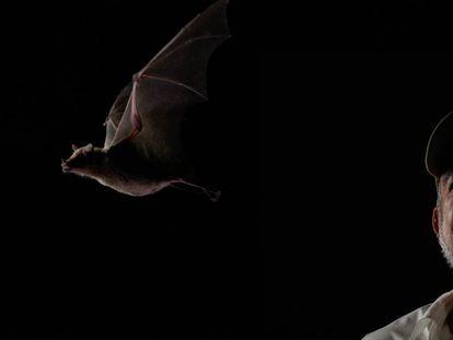 El biólogo Rodrigo Medellín, junto a un ejemplar del murciélago magueyero, 'Leptonycteris yerbabuenae'.