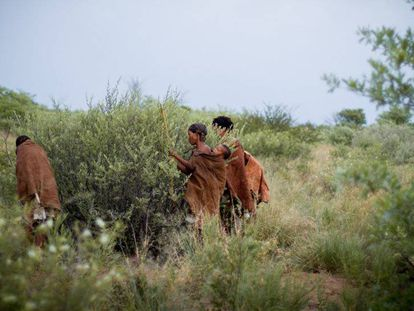 Tres mujeres san seleccionan frutos de un arbusto en Ghanzi (Botsuana).
