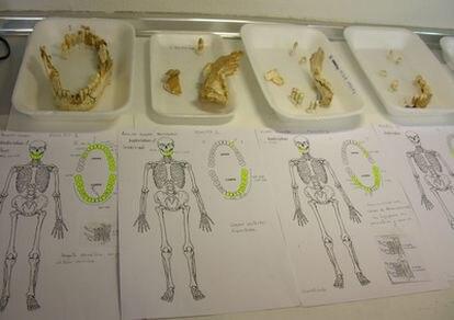 Piezas dentales fósiles de neandertales de la cueva de el Sidrón (Asturias) con sus notas de identificación.
