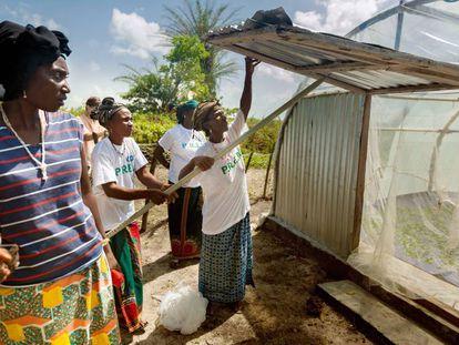 Un grupo de mujeres agricultoras en Katfoura, Guinea.