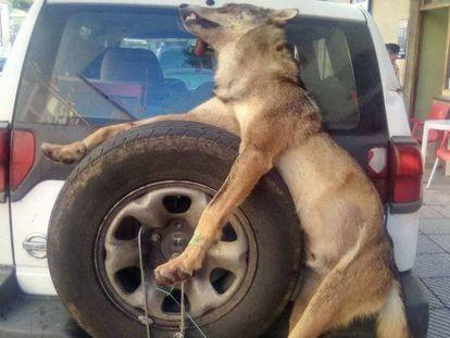 Imagen del animal muerto difundida en redes sociales.