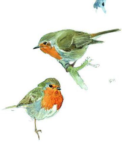 Ilustración de dos ejemplares de petirrojo europeo.