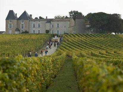 Viñedos del Château d'Yquem, de unos 250 acres, en la región francesa de Burdeos.