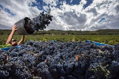 Historias de vinos. 'Locos por la fruta' Cosecha de uva tempranillo (Rioja) - ©Abel Valdenebro