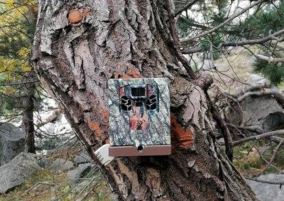 Una máquina de 'fototrampeo' con la que logran detectar a los lobos.