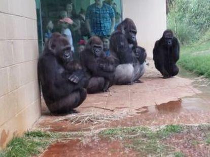 El vídeo fue grabado en un zoológico de Estados Unidos