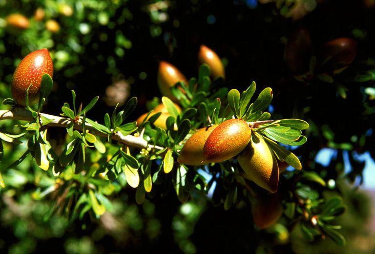 Uno de los productos más conocidos de la zona de Marrakech y Essaouira es el aceite de Argán, muy cotizado en los últimos años en toda Europa.