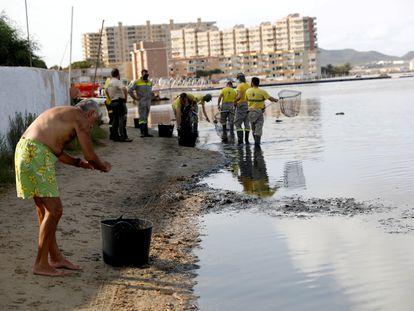 Un vecino ayuda en la retirada de peces muertos en el mar Menor.