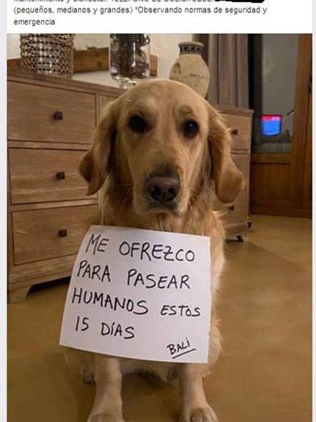 Anuncio de alquiler de perros publicado por un vecino de A Coruña denunciado por el Seprona.