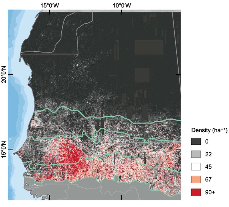 Cantidad de árboles por hectárea en el área del estudio, en la porción occidental del Sáhara y el Sahel.