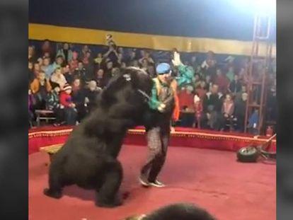 Momento en el que el animal se abalanza sobre su domador durante la función de circo.