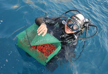 Un equipo de biólogos recupera coral rojo en el Parc Natural del Montgrí- Medes.