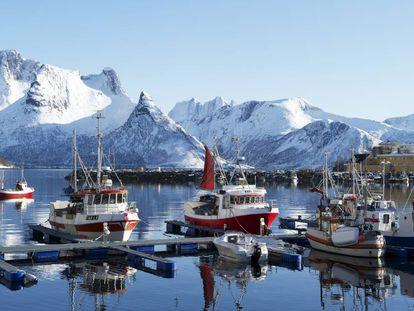 Barcos de pesca del skrei en el puerto de Husoya, en Noruega.