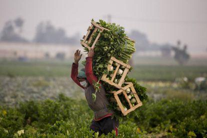 En Guatemala, el sector agrícola es uno de los que genera más divisas por exportación, sin embargo, en el segundo trimestre de 2020 se han reportado 40.000 desempleos debido a la pandemia.