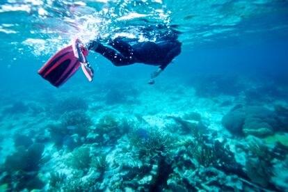 El arrecife de coral de Belice, una enorme atracción turística antes de la pandemia.