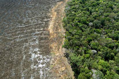 Esta foto de archivo del 7 de agosto de 2020 muestra una vista aérea de un área deforestada cerca de Sinop, estado de Mato Grosso, Brasil.