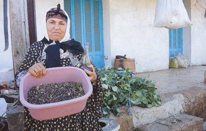 El mirto, un producto forestal no maderero que se explota en Túnez.
