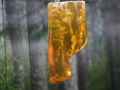 Una pieza de copal, a medio camino entre resina y ámbar, con insectos atrapados.
