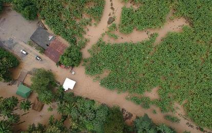Vista de una finca bananera en Izabal, Guatemala, tras las inundaciones por el huracán Iota.