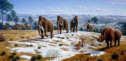 Algunos de los animales que vivían en el norte de España durante la última edad de hielo y que ya se han extinguido