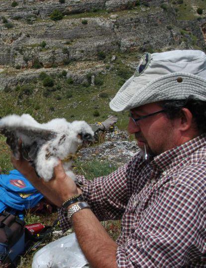 esús Ángel Lemus con un ave en las Hoces del Duratón (Segovia), en 2007.