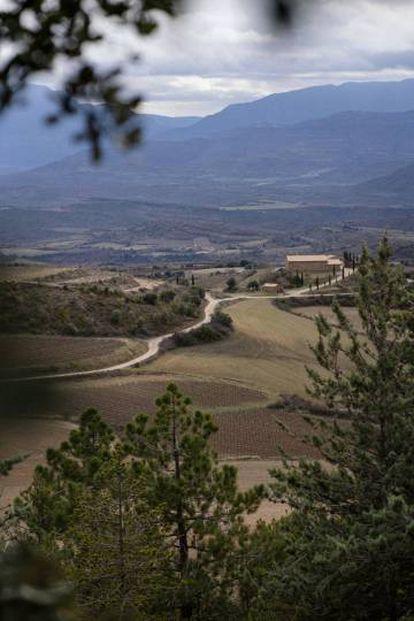 Los viñedos de Sant Miquel, en Tremp, están situados al pie del Pirineo catalán, a una altura de 850 metros.