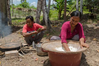 The leader with a colleague from her cooperative grates the cassava tuber to extract its starch.