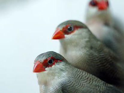 Varios pájaros, inspiradores del logo de Twitter.