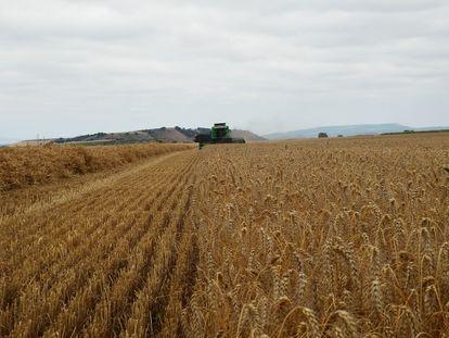 Una máquina cosecha en un campo de cereal en La Rioja.