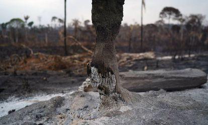 El tronco de un árbol arrasado por el fuego en la Amazonia.