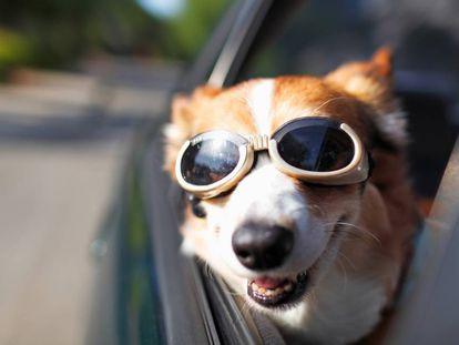 Así es como no debe viajar tu perro, aunque le encante.
