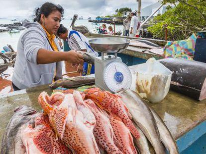 Venta de pescado en Puerto Ayora, en Galápagos.
