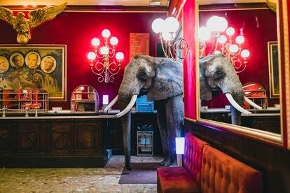 Mambo, elefante de René Cassely. Bar de la Emperatriz. Circo de Hiver Bouglionne, Francia 2014.