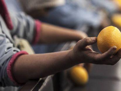 Procesamiento de naranjas.